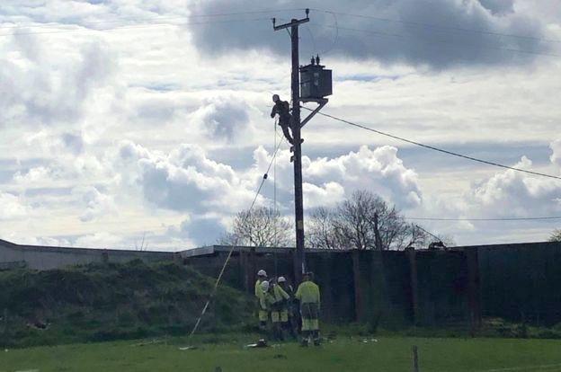 イギリス 停電 牛 電柱 破壊に関連した画像-03