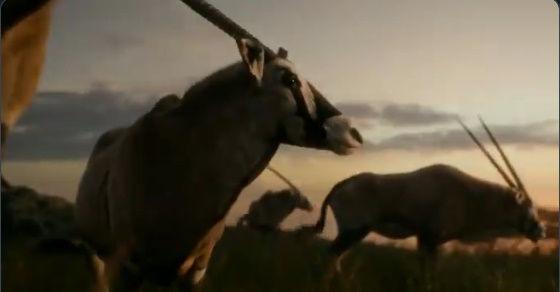 ライオンキング予告に関連した画像-03