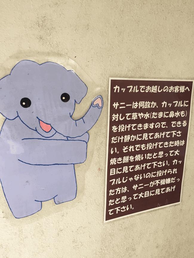 リア充 ゾウ 象 カップルに関連した画像-02