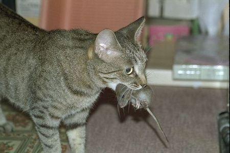 ディズニー キティ マイメロに関連した画像-01