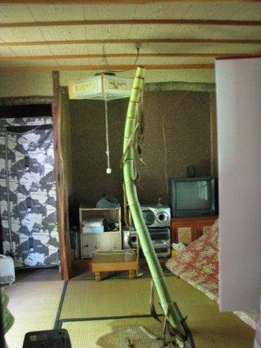 イギリス 竹 ブームに関連した画像-05