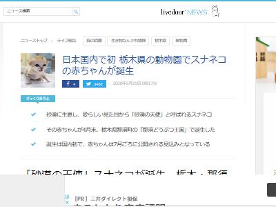 スナネコ 動物園 赤ちゃん 日本初に関連した画像-02