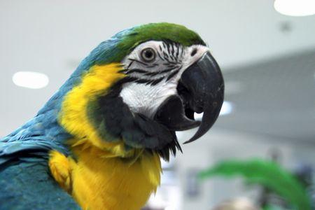 オーストラリア オウム 鳥よけ 破壊に関連した画像-01