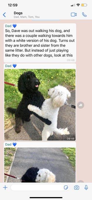 散歩 偶然 遭遇 犬 抱き合う 兄弟に関連した画像-03