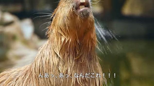 大塚明夫 声優 BL カピバラさん 動画 Youtube LIXIL MADEに関連した画像-04
