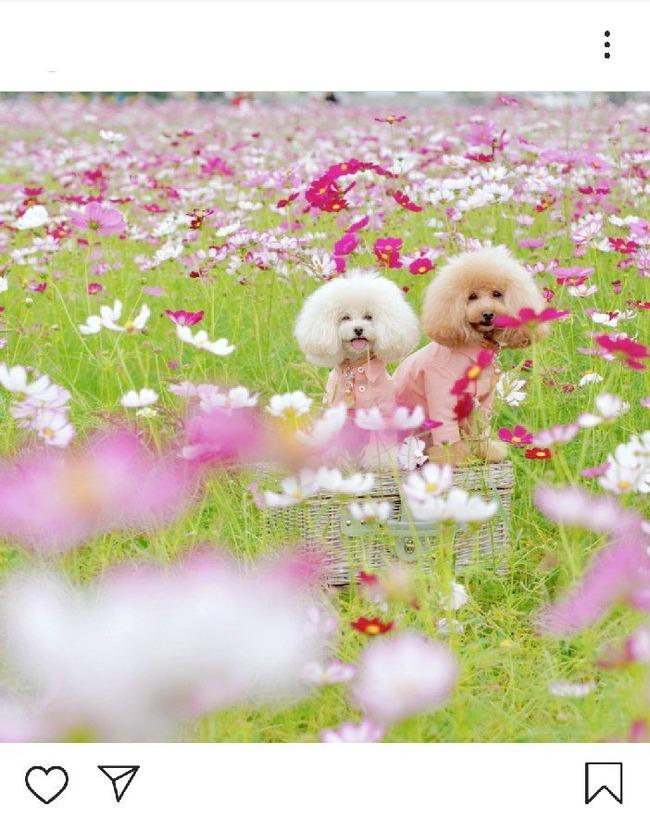 犬 インスタ 写真 ツイッター 炎上 花畑 立入禁止に関連した画像-03