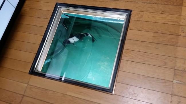 夫 床下 床下収納 嫁 ブチギレ 錦鯉 魔改造に関連した画像-02