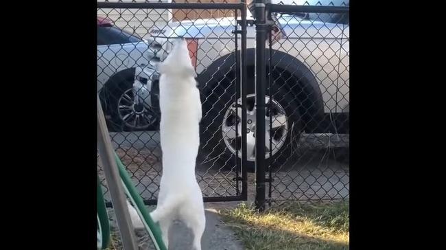 全盲 犬 感動に関連した画像-05