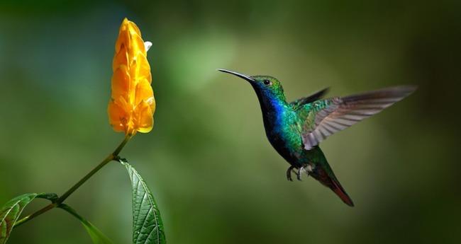 オーストラリア 花 ハチドリに関連した画像-03