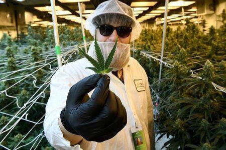 【は?】外国人「大麻はうつ病にも効果があるのに日本ではむしろ取り締まりが厳しくなるなんて意味不明。日本は大麻後進国」