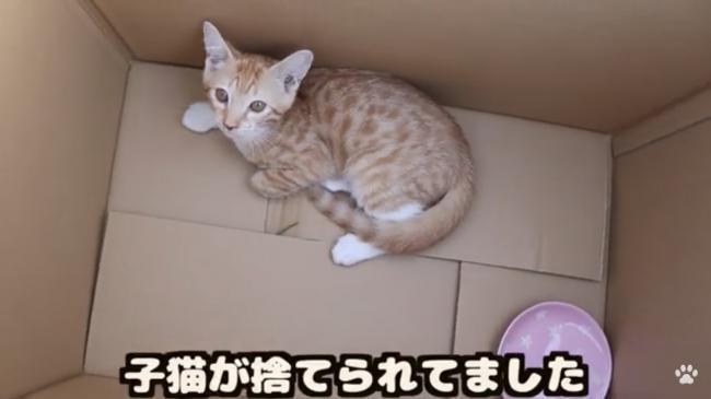 動物 YouTuber 猫 自演に関連した画像-13