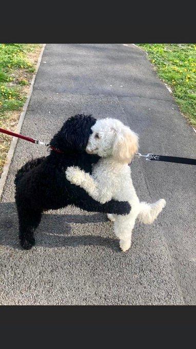 散歩 偶然 遭遇 犬 抱き合う 兄弟に関連した画像-04