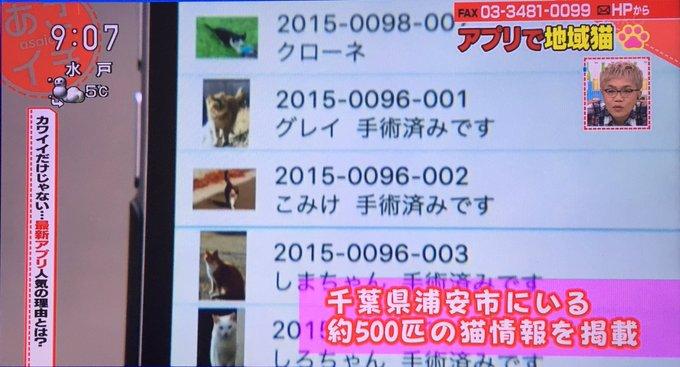 野良猫 地域猫 アプリ あさイチ 毒殺に関連した画像-02