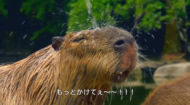 大塚明夫 声優 BL カピバラさん 動画 Youtube LIXIL MADEに関連した画像-08
