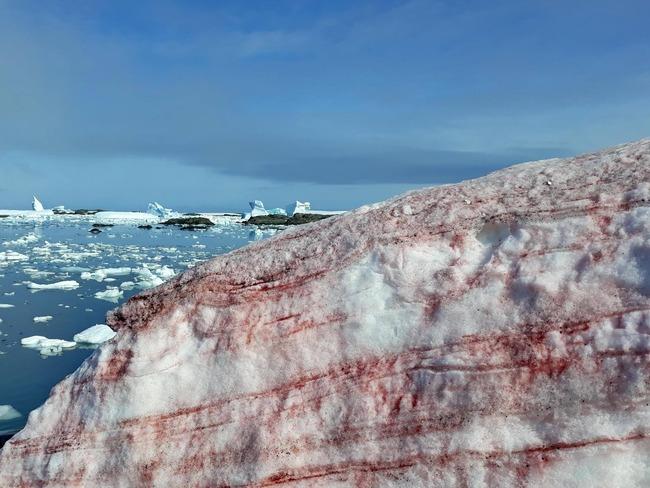 南極基地周辺 血の雪 猟奇的に関連した画像-03