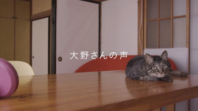 猫 かるかん 声 病気に関連した画像-14