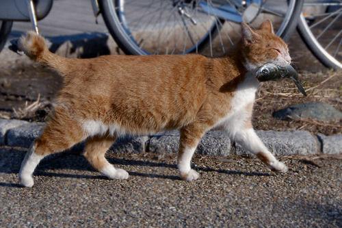 猫 魚に関連した画像-01