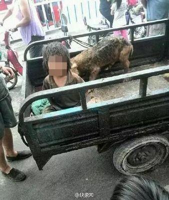 豚 男児 農家 中国 虐待に関連した画像-03