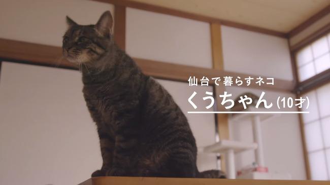 猫 かるかん 声 病気に関連した画像-02