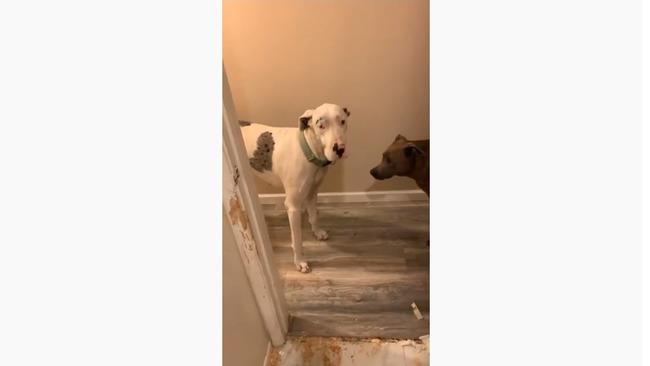 犬 浴室 大暴れに関連した画像-06