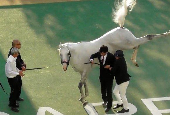 ウマ娘 ゴールドシップ ゴルシ 語録 元ネタ 競馬に関連した画像-11