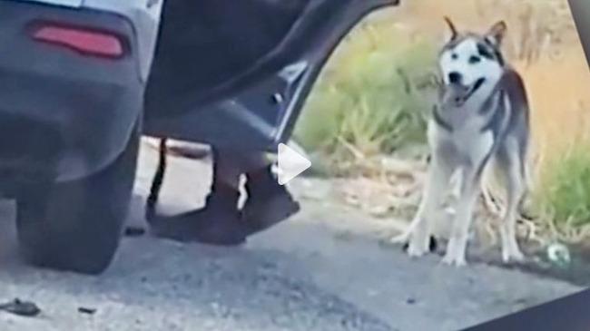 ハスキー 捨て犬に関連した画像-01