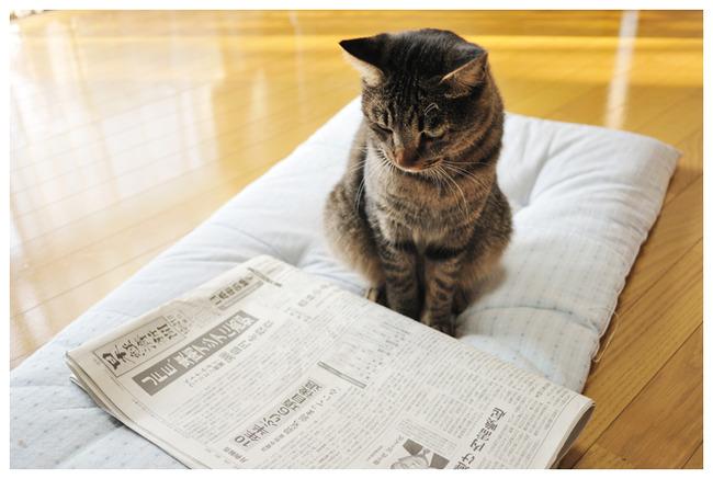 読売新聞に関連した画像-01