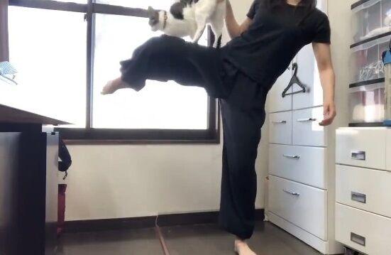 蹴り解説動画 猫乱入 癒やしに関連した画像-09