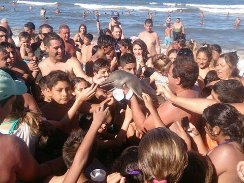 イルカ 脱水症 ラプラタカワイルカ 海 アルゼンチン 観光客 SNSに関連した画像-03