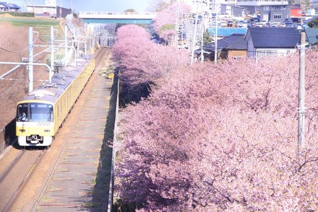 カメラマン 桜 電車 写真 奇跡の一枚に関連した画像-02