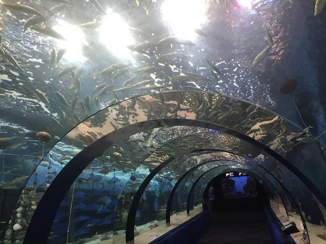 水族館 魚 浅虫水族館に関連した画像-05