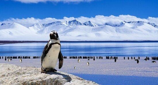 南極コロナ感染確認に関連した画像-01