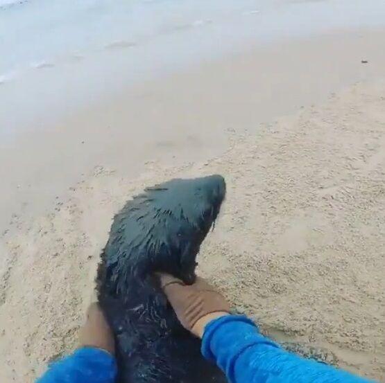 オットセイ 漁網 切断 NGO団体 紳士 優しい世界に関連した画像-07