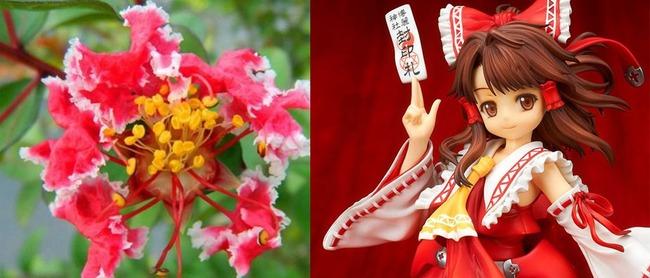 中国 新品種 花 霊夢 東方プロジェクトに関連した画像-03