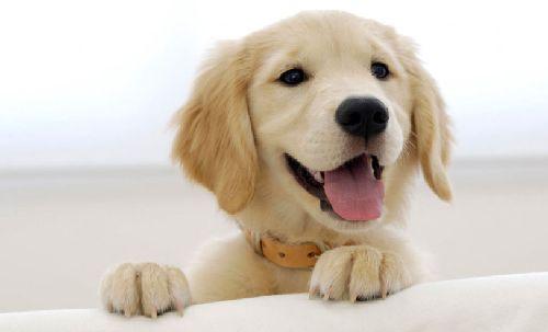 犬 ペット 死亡 リスク 低下 1人暮らしに関連した画像-01