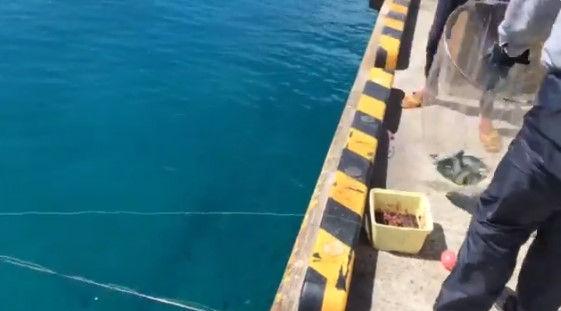 釣り客 観光客 八丈島 ムロアジに関連した画像-03