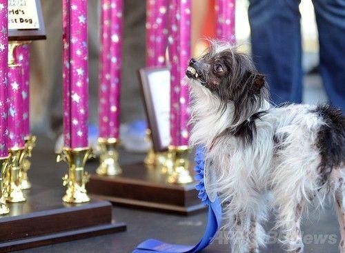 世界一醜い犬コンテストに関連した画像-05