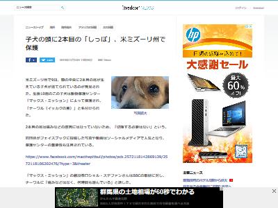 子犬 額 しっぽに関連した画像-02