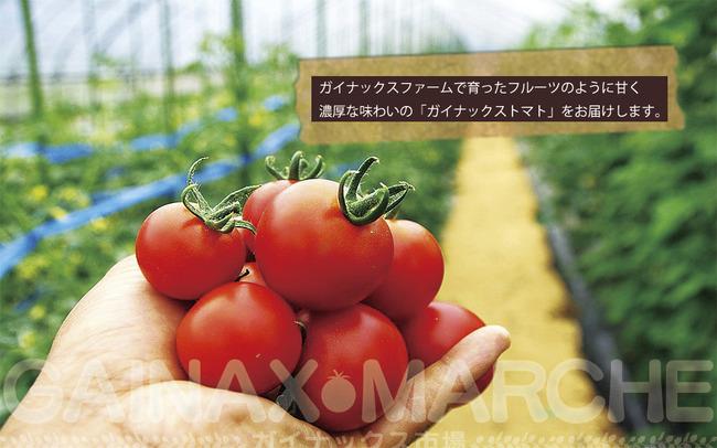 ガイナックス トマト 迷走に関連した画像-01