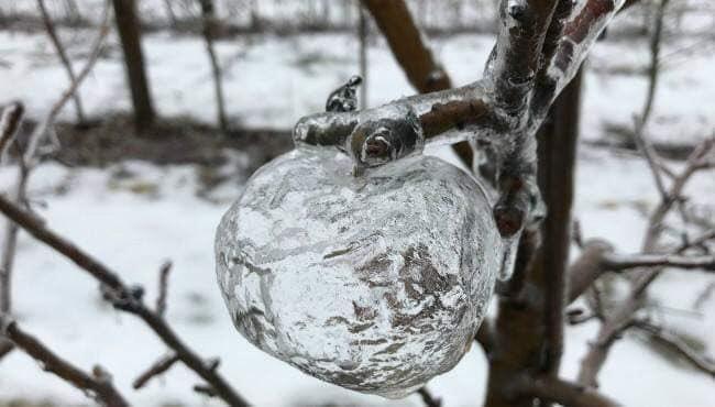 ゴーストアップル りんご 氷 自然に関連した画像-03