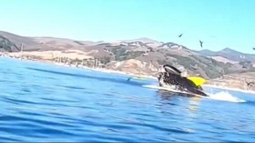 クジラ ホエールウォッチングに関連した画像-05