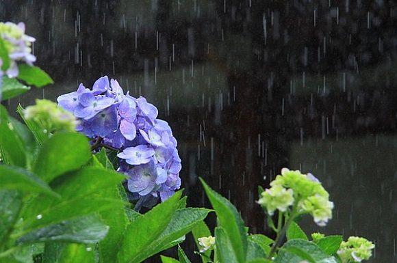 梅雨入りに関連した画像-01