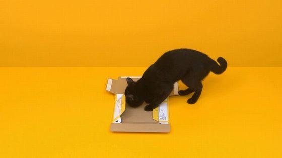 黒猫 組み立てに関連した画像-04