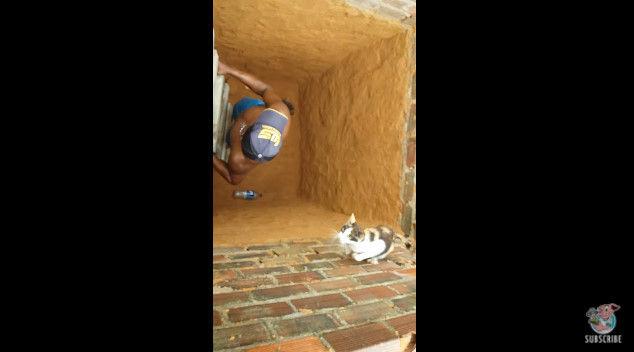 ネコ 穴 脱出 救出 猫 に関連した画像-09