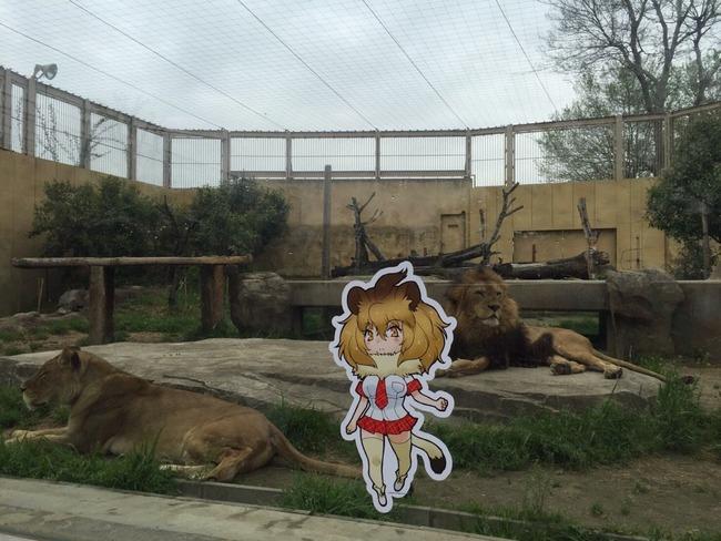 けものフレンズ 東武動物公園 コラボ パネル 動物 フレンズに関連した画像-07