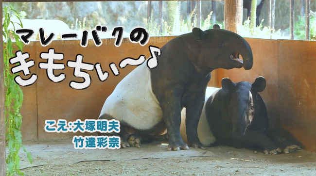 竹達彩奈 大塚明夫 マレーバク 気持ちいい に関連した画像-02
