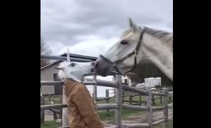 馬 被り物 驚きに関連した画像-01