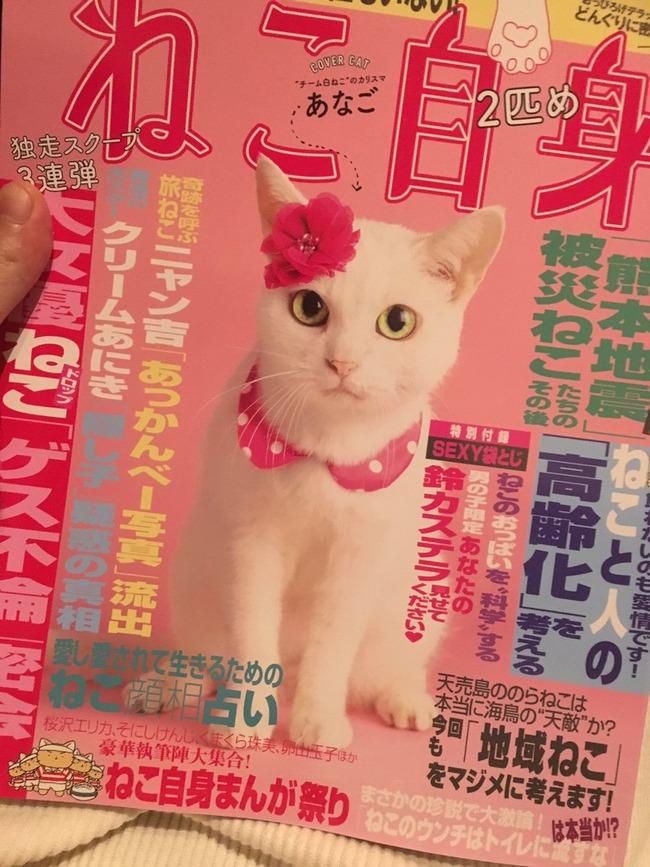 ねこ自身 ネコ 袋とじ 18禁に関連した画像-02