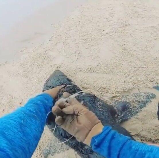オットセイ 漁網 切断 NGO団体 紳士 優しい世界に関連した画像-05