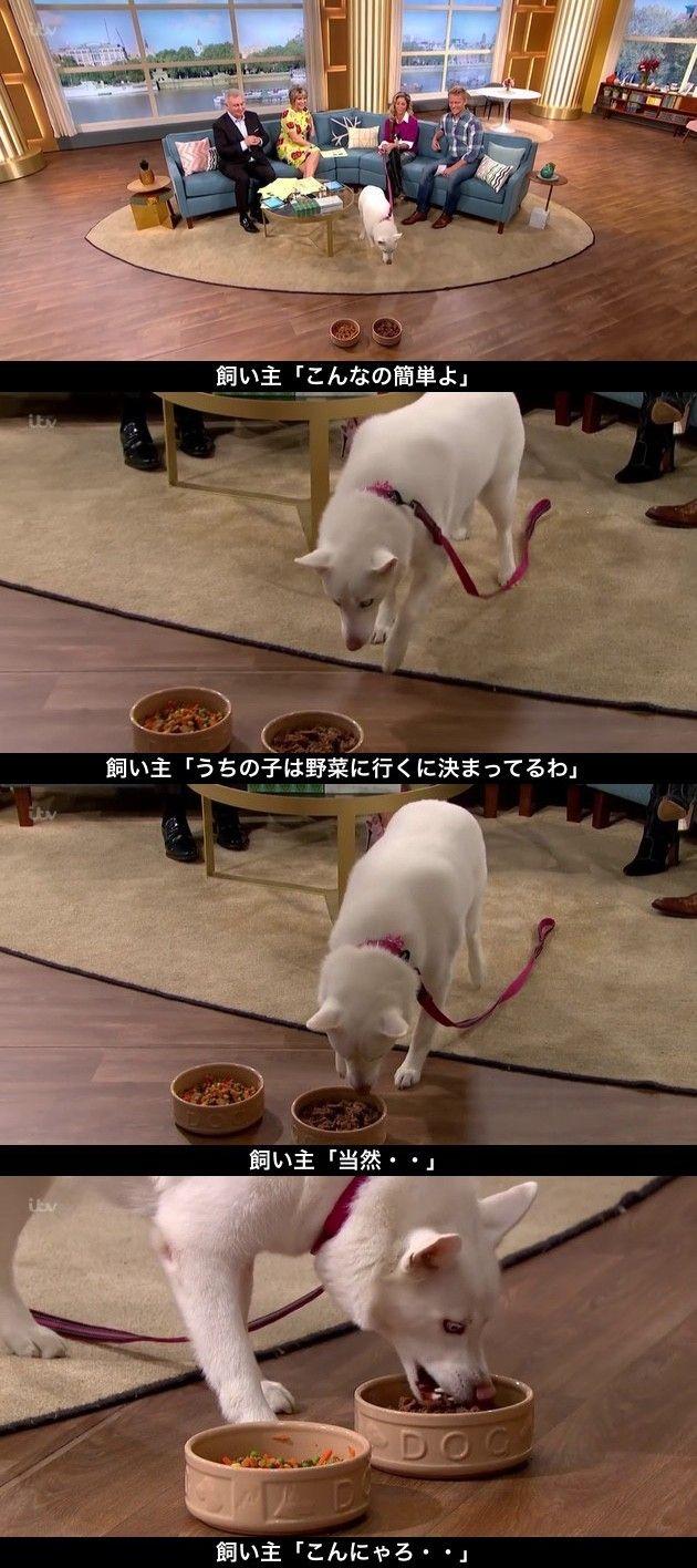 菜食主義 ペット 飼い主に関連した画像-03